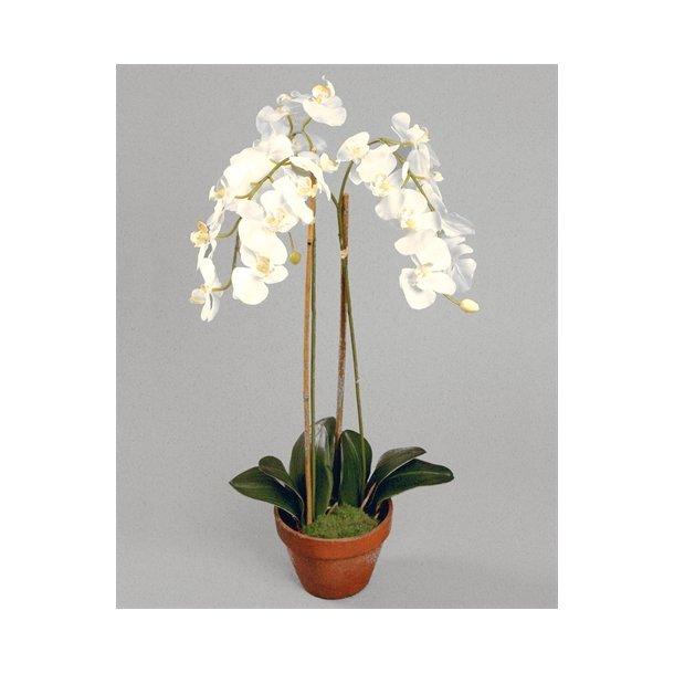 Kunstig orkidé creme - H: 75 cm